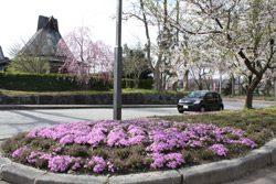 4月 観光名所 テルメ柏陵健康温泉館駐車場周辺