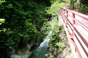 5月 新緑の神通峡